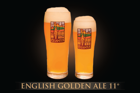 English Golden Ale 11°