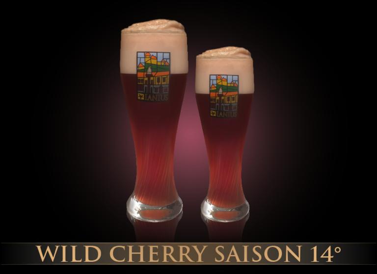 Wild Cherry Saison 11°