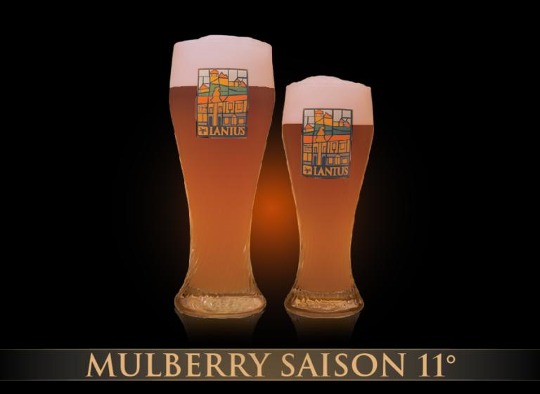 Belgian Mullbery Saison 11°