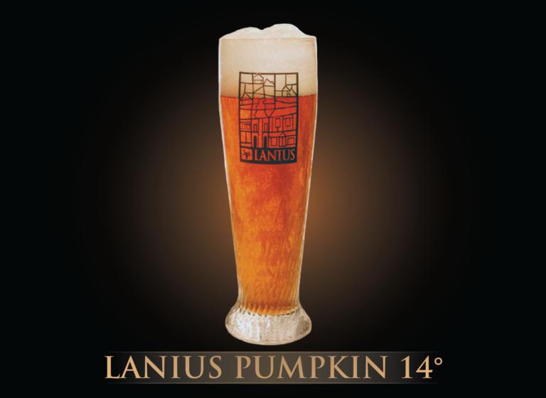 Lanius Pumpkin 14°